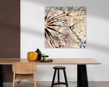 Paardenbloem Dauwdruppels  van Julia Delgado