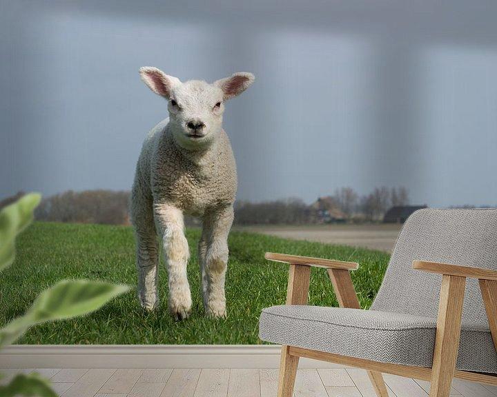 Sfeerimpressie behang: Rennend lam op de dijk bij Wierum, lente in Friesland van Tim Groeneveld