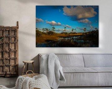 Everglades van Wim Alblas