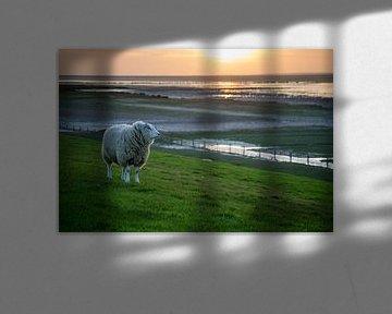 """""""De Wachter"""", schaap (Texelaar) op de dijk bij de Waddenzee tijdens zonsondergang van Tim Groeneveld"""