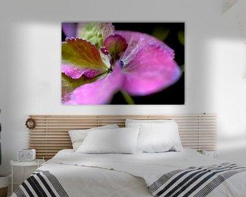 Bloem, Plant, Roze von Agnes Meijer