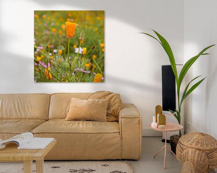 Sfeerimpressie: Oranje klaproos in bloemenveld van Berthilde van der Leij