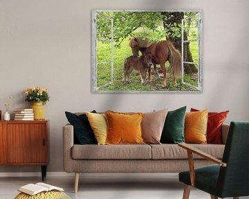 Fensterblick - Pony von Christine Nöhmeier