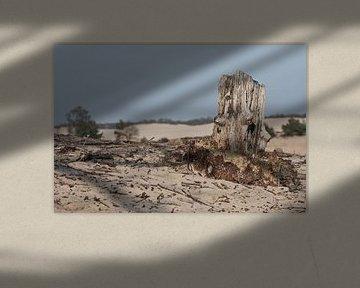 Oude boomstronk bij Loonse en Drunense duinen