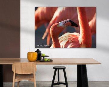 Roze Flamingo van Koos Koosman