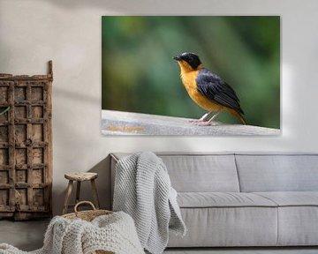 Vogel Oog Contact van Koos Koosman