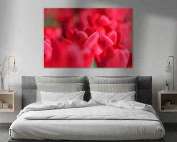 Tulpenrood von Willy Sybesma