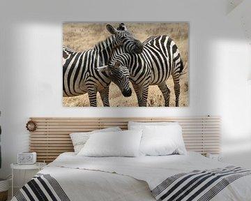 Zebra hugg von Willy Sybesma