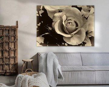 Roos van Leo Langen