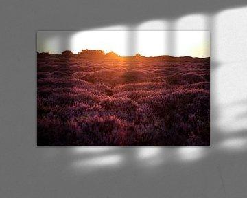Bloeiende heide met ondergaande zon von Berthilde van der Leij