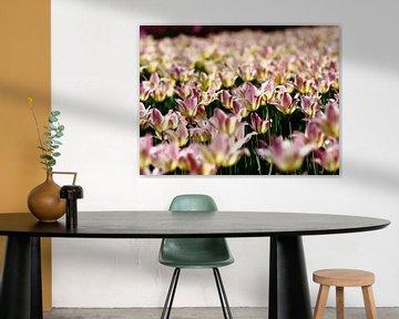 Tulpen van Thijs Schouten