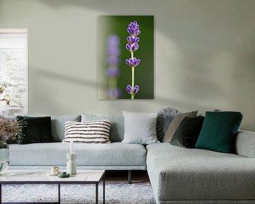 Lavendel takken van Thijs Schouten