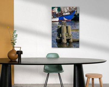 Greifswald : Holzmole mit Seemöwe im Hafen Wieck