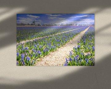 molen tussen de hyacinten van eric van der eijk