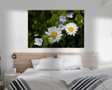 Gänseblümchen von Andreas Müller