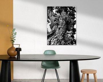 Tree Magic 88 von MoArt (Maurice Heuts)