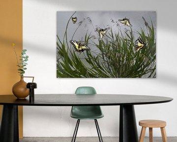 Schmetterlinge im Schilf von Christine Nöhmeier