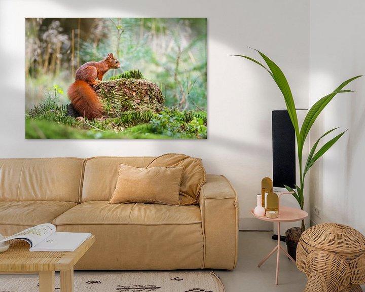 Sfeerimpressie: Eekhoorn van Pim Leijen
