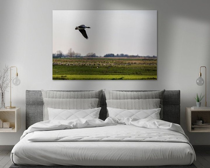 Impression: Canadian Geese in The Netherlands sur noeky1980 photography