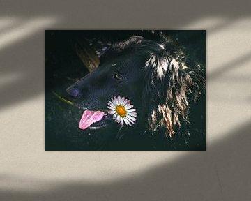 Mischlingshund von Christine Nöhmeier