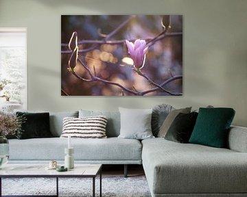 Magnolia van Jessica Van Wynsberge