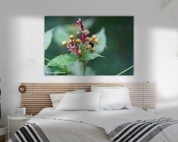 Bloeiende bloemen en vruchten von Koos Koosman