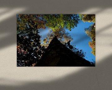 Eindeloze boom van Thomas Poots
