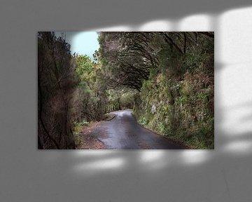 levada wandeling naar de 25 watervallen op madeira