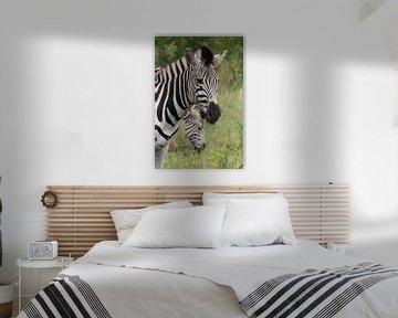 Zebra von LottevD