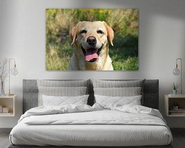 Hund Labrador von Marcel Ethner