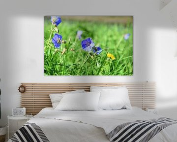 Blaue Blume (Storchschnabel) von Marcel Ethner