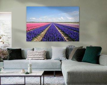Blauwe en roze hyacinten van Barbara Brolsma