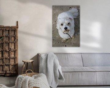 schmutzigen kleinen Hund von Berthilde van der Leij