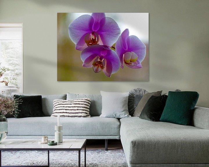 Beispiel: Orchidee von Sandra de Moree