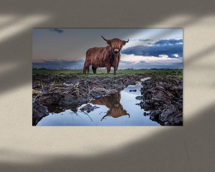 Impression: Rood Bruine Schotse Hooglander sur Martijn van Dellen