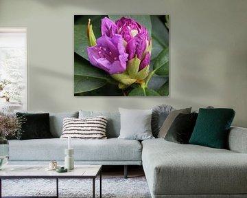 Paarse bloem von Henriëtte Kelderman-Makaaij