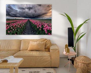 Tulpen onder de storm van Costas Ganasos