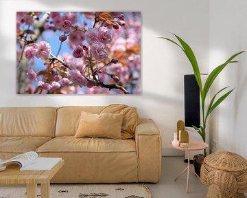 Blütenzeit van zwergl 0611