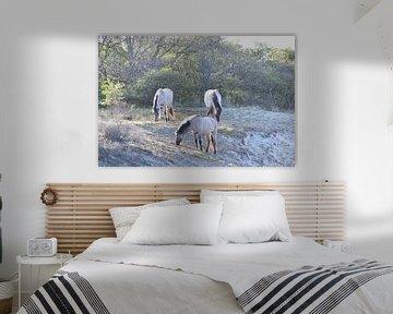 Wilde paarden sur Amber van den Broek