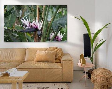 paradijsvogel bloem von Compuinfoto .