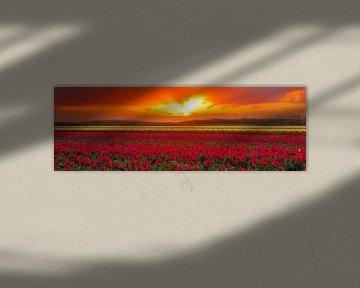 Bloembollenveld tijdens de zonsopkomst van eric van der eijk