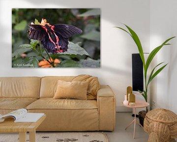 Vlinders de gevleugelde Insecten von Koos Koosman