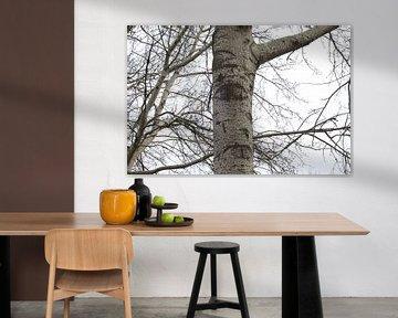 Huilende boom sur Berthilde van der Leij