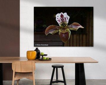 Orchidee de Venusschoentje von Koos Koosman