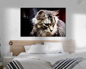 Wildkatze von Margitta Frischat