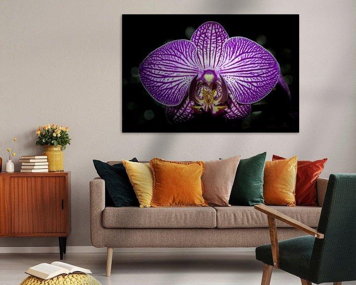 Impression: Orchidee sur Maerten Prins