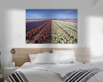 Gekleurde hyacintenvelde in het voorjaar van Maurice de vries