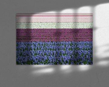 Blauw,  paars, wit en roze hyacinten in bloei von Tiny Hoving-Brands