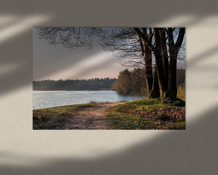 Sfeerimpressie: Sunrise Trees van William Mevissen