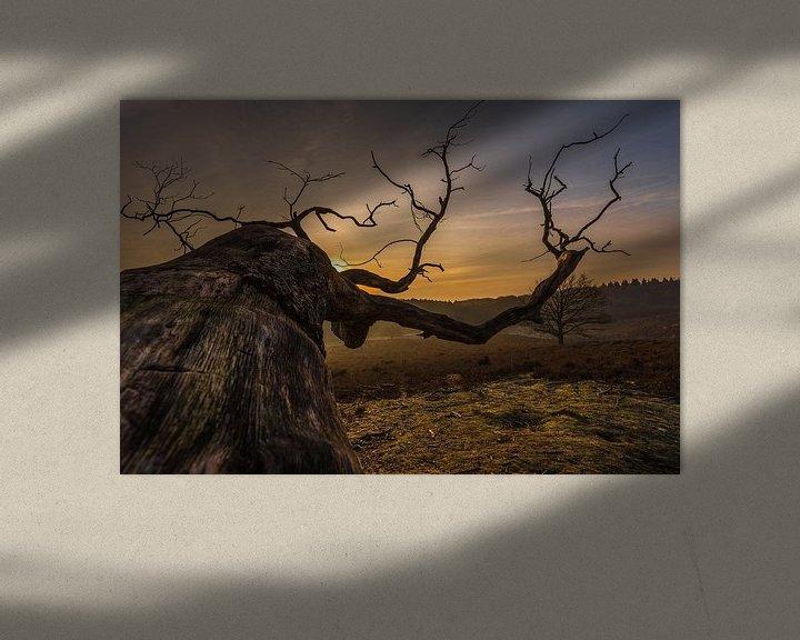 Sfeerimpressie: Old Tree van Davy Sleijster